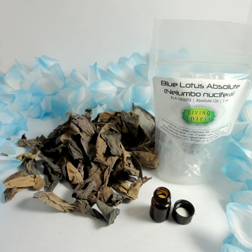 Blue lotus absolute oil n nucifera mightylinksfo