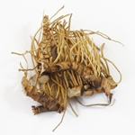 Calamus Root Whole